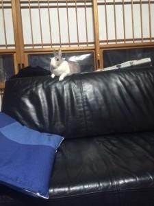 ソファにのるソラ