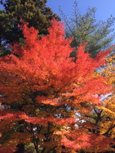 毛越寺の紅葉