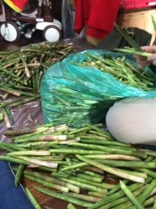 竹の子 2